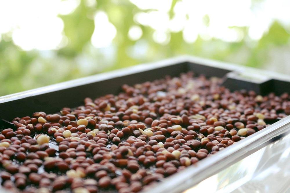 nasiona do kiełkowania